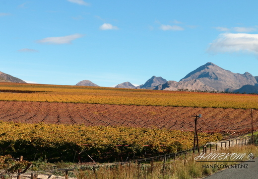 Autumn Vineyards, Hexriver Valley